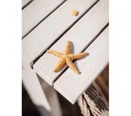 Dekoratyvinė jūrų žvaigdžė (6,5 cm) 1