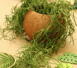 "Dekoratyvinis indelis ""Kokosas"" (13x10 cm) 1"