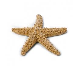 Dekoratyvinė jūrų žvaigdžė (6,5 cm)