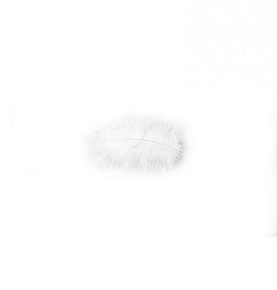 Dekoratyvinės plunksnos, baltos (10 g./5-10 cm)
