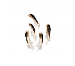 Dekoratyvinės plunksnos, rudos-juodos (24 vnt.)