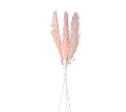 Dekoratyvinės smilgos-pampa, rausvos (3 vnt./100-135 cm)